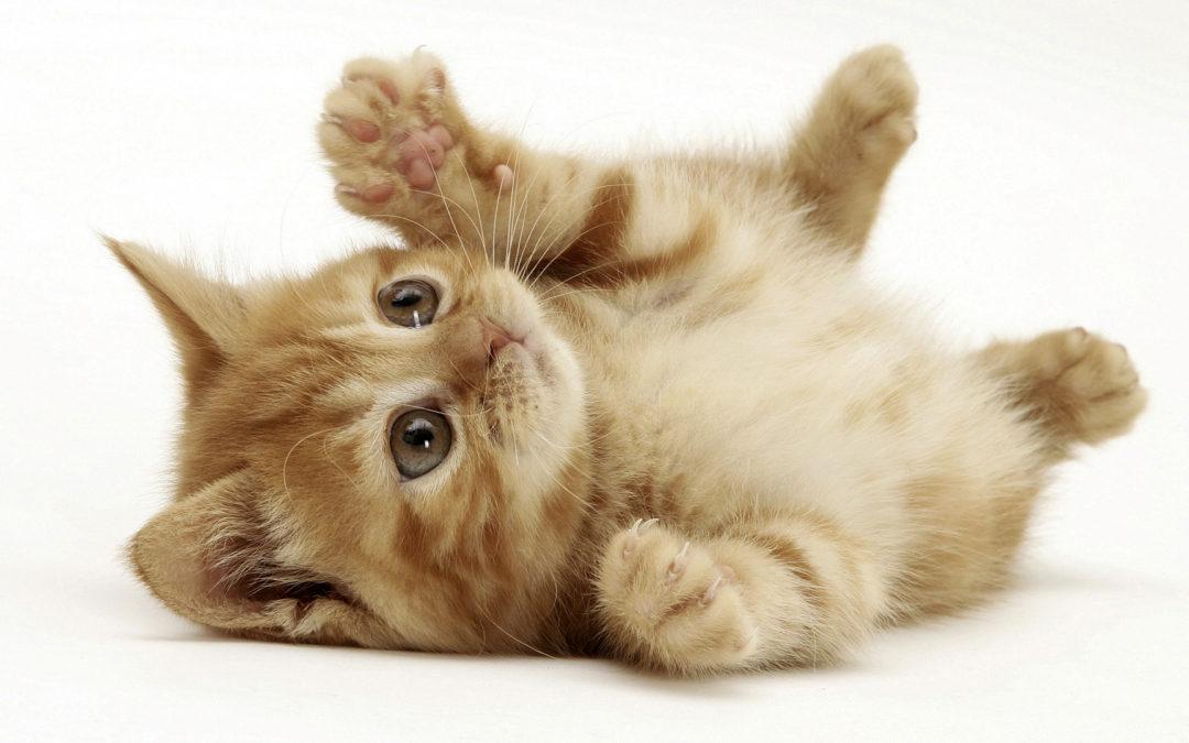 IdentiKit Cat