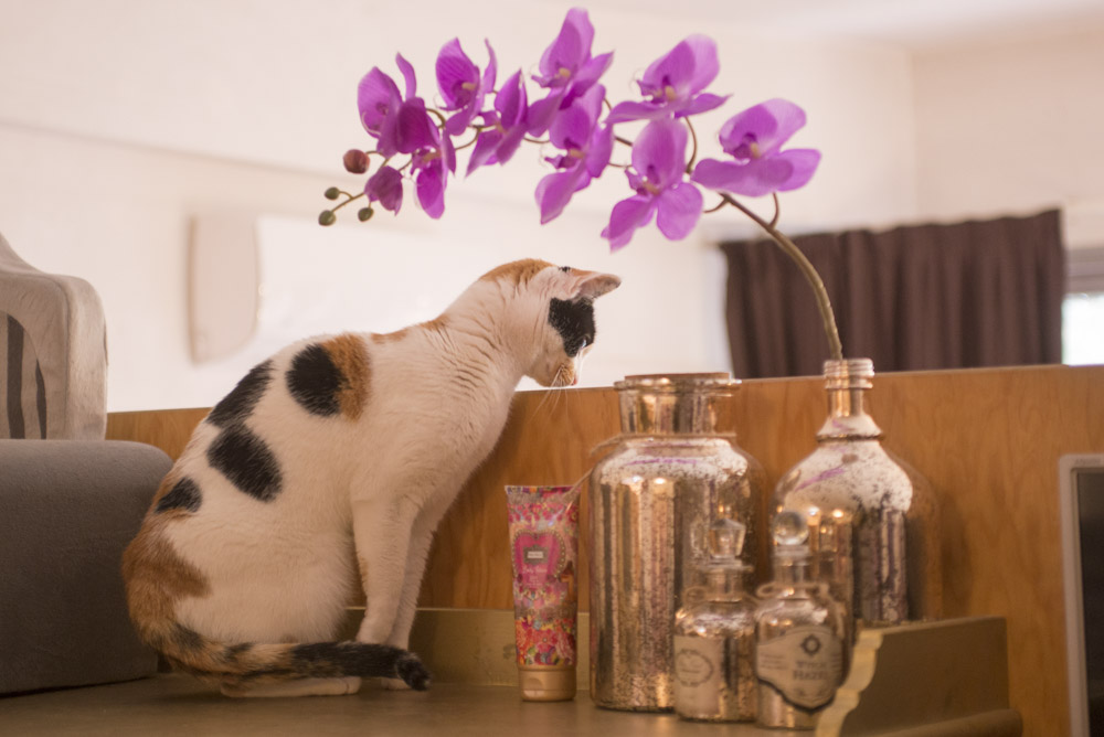 CatSuiteHome-6696