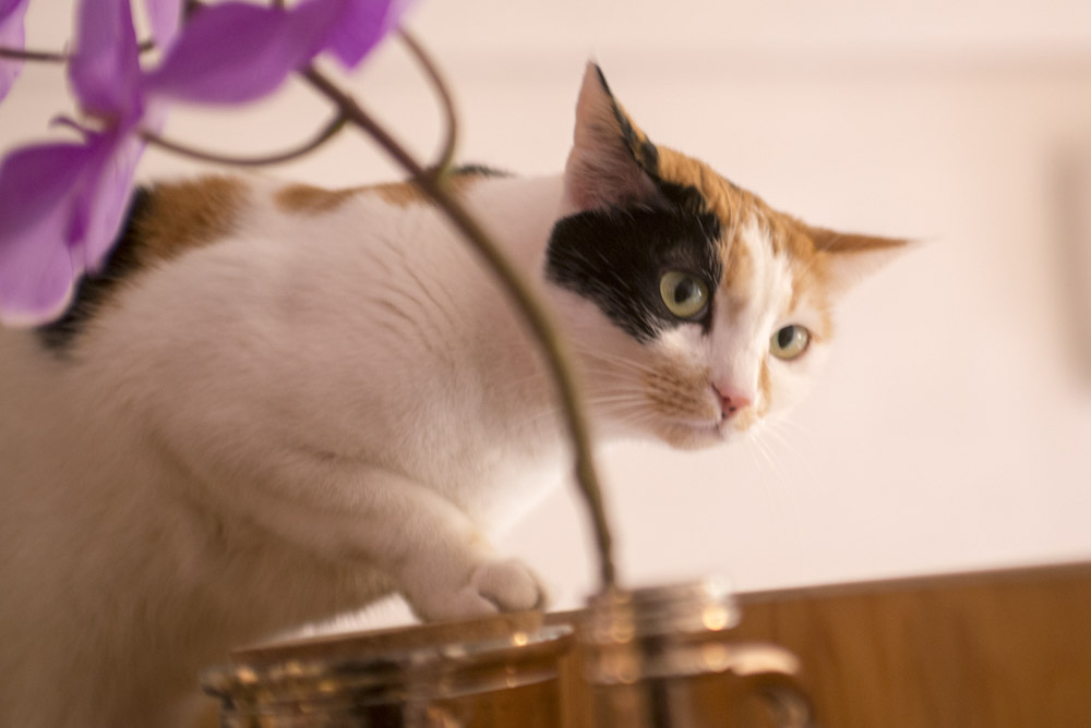 CatSuiteHome-6702