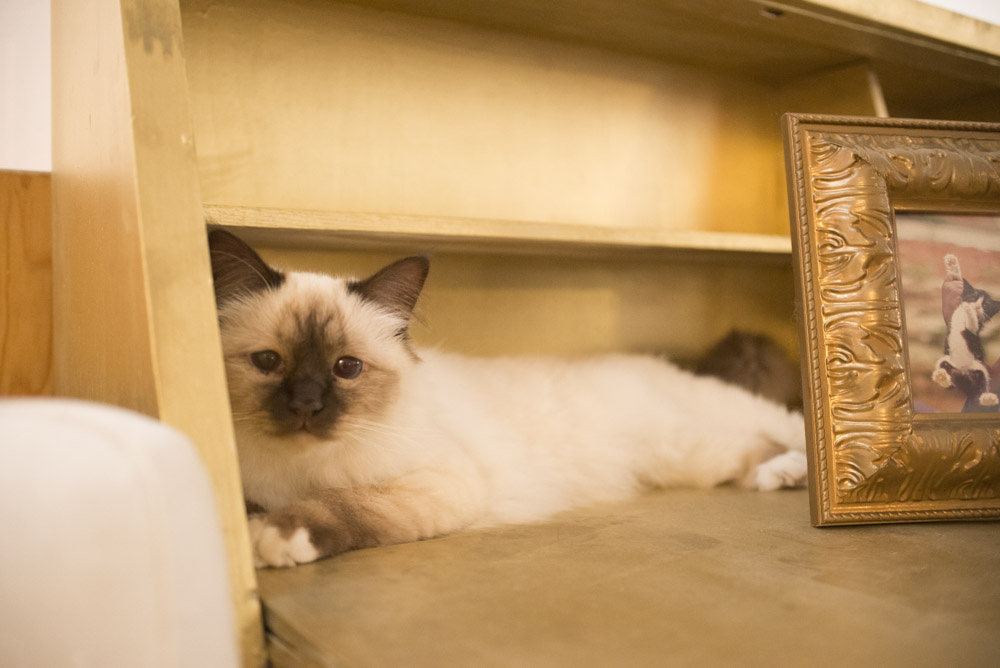 CatSuiteHome-6814