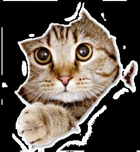 gatto strappo