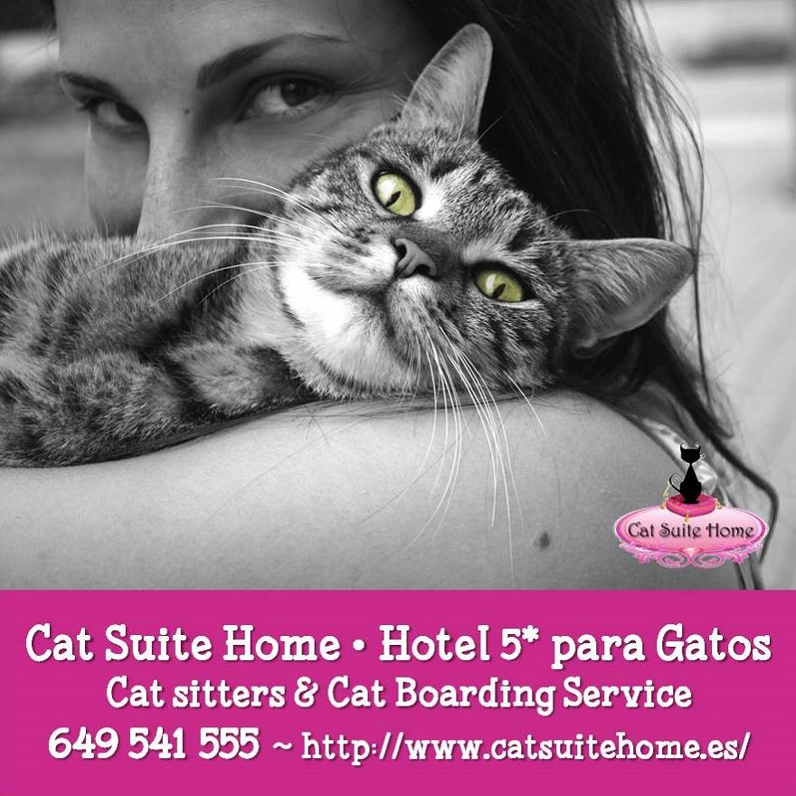 001 Cat Suite Home Marbella Spagna