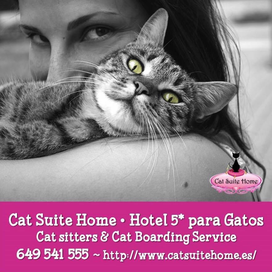 001 Cat Suite Home Marbella Spagna