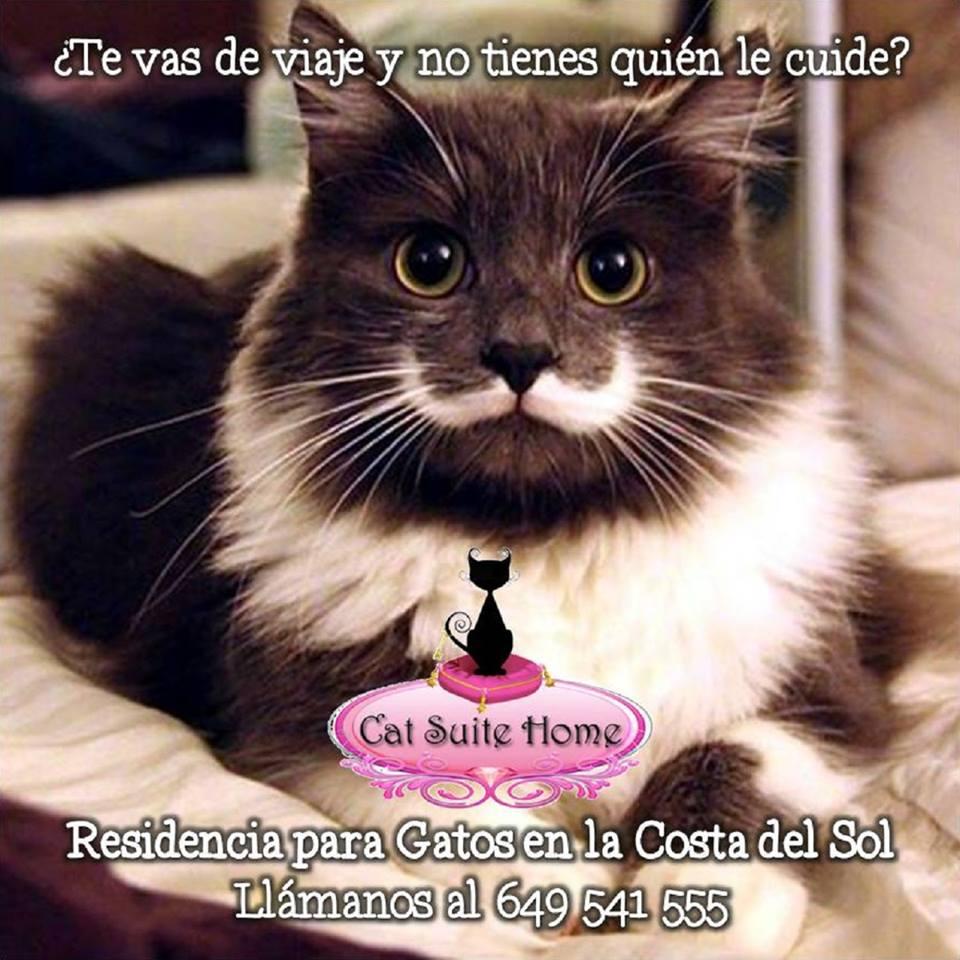 002 Cat Suite Home Marbella Spagna