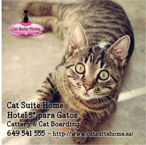 003b Cat Suite Home Marbella Spagna