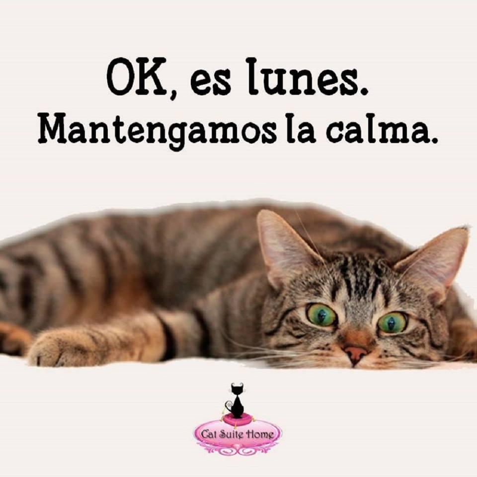 005b Cat Suite Home Marbella Spagna