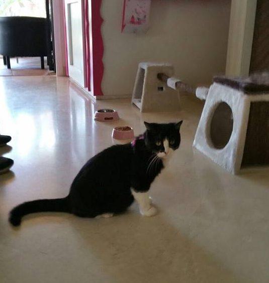 006 Cat Suite Home Marbella Spagna