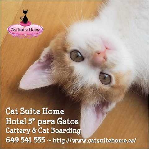 020 Cat Suite Home Marbella Spagna