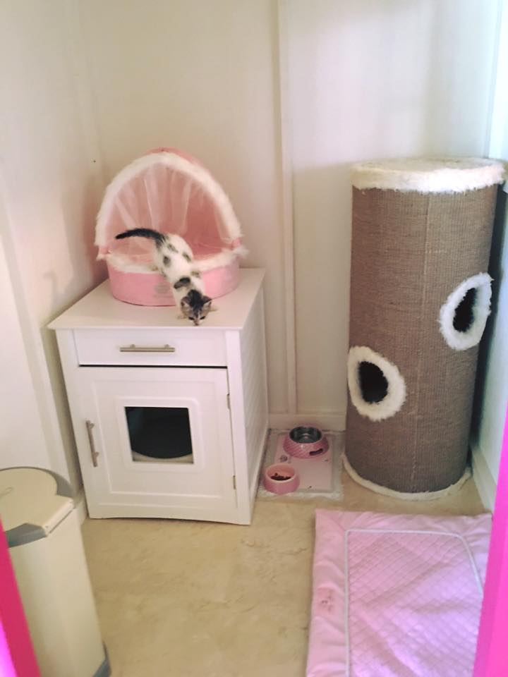 11c Le Cat Suite Home Marbella Spagna