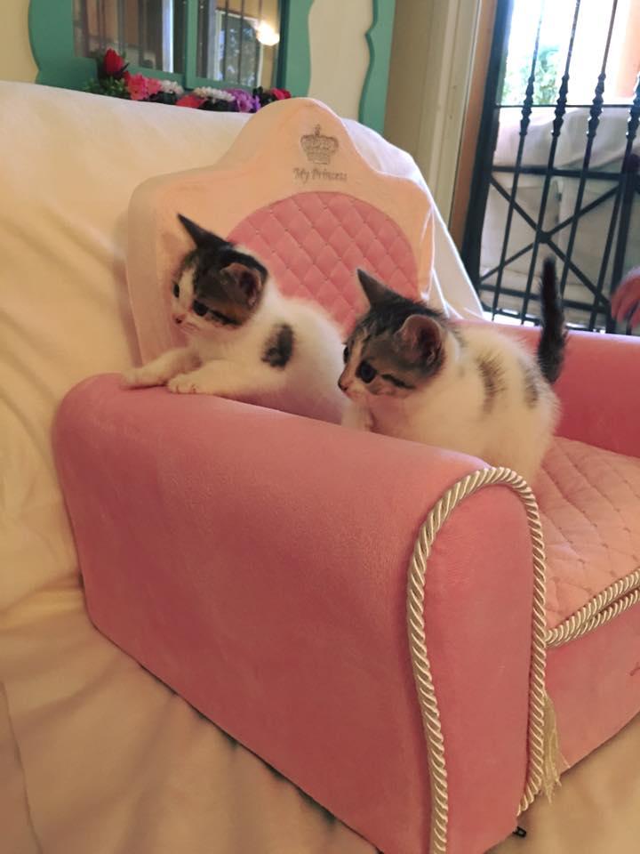 11d Le Cat Suite Home Marbella Spagna