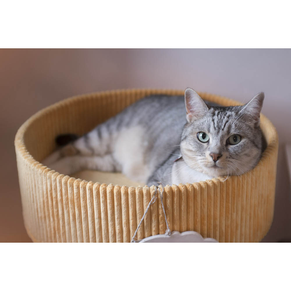 CatSuiteHome-6679