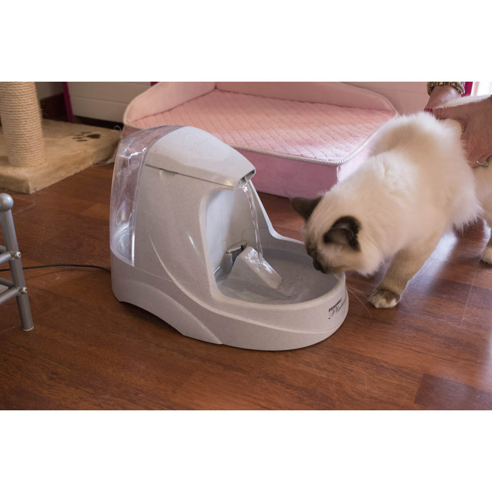 CatSuiteHome-6905