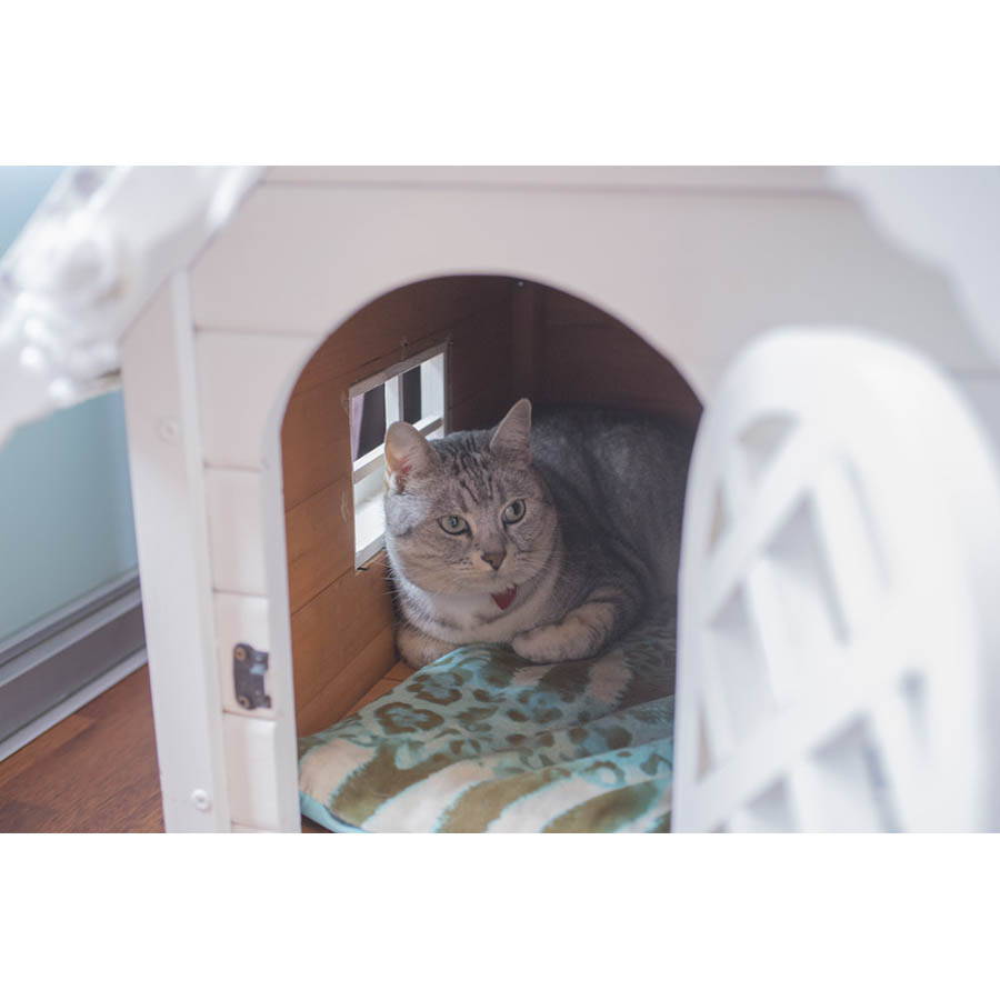 CatSuiteHome-6932