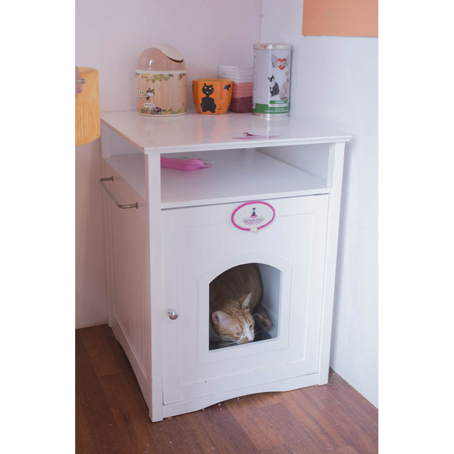 CatSuiteHome-6942