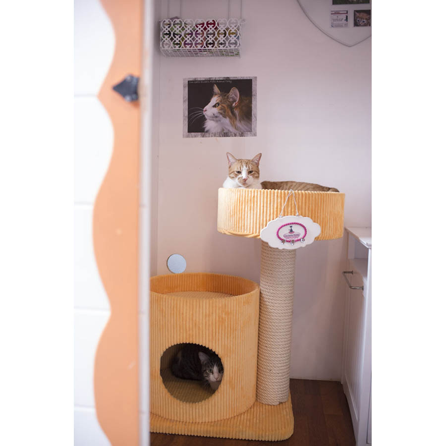 CatSuiteHome-6945