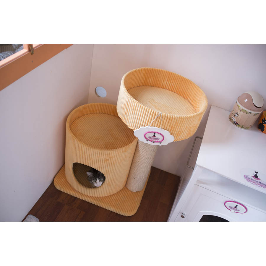 CatSuiteHome-6952